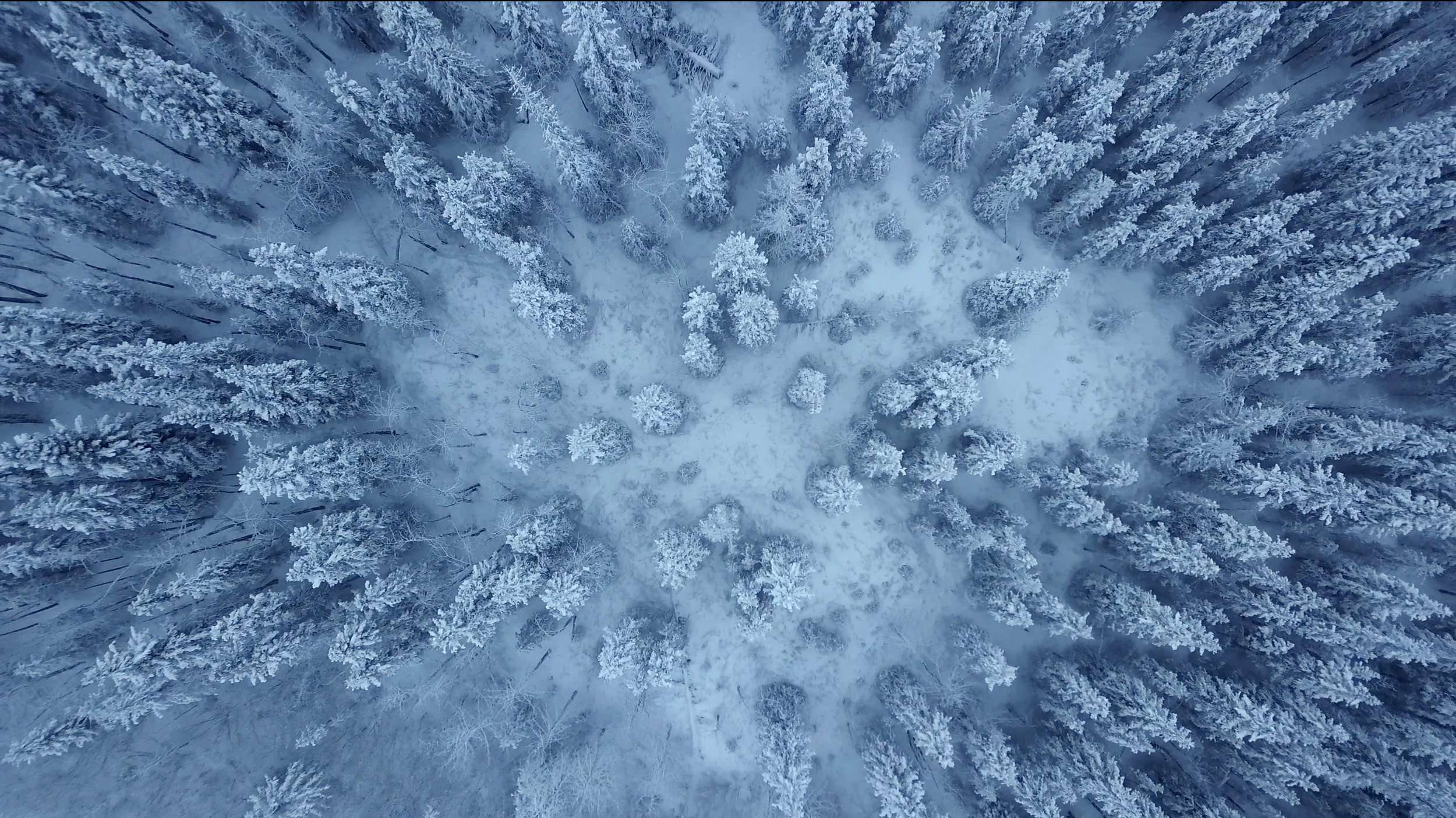 Snowy Pines.png