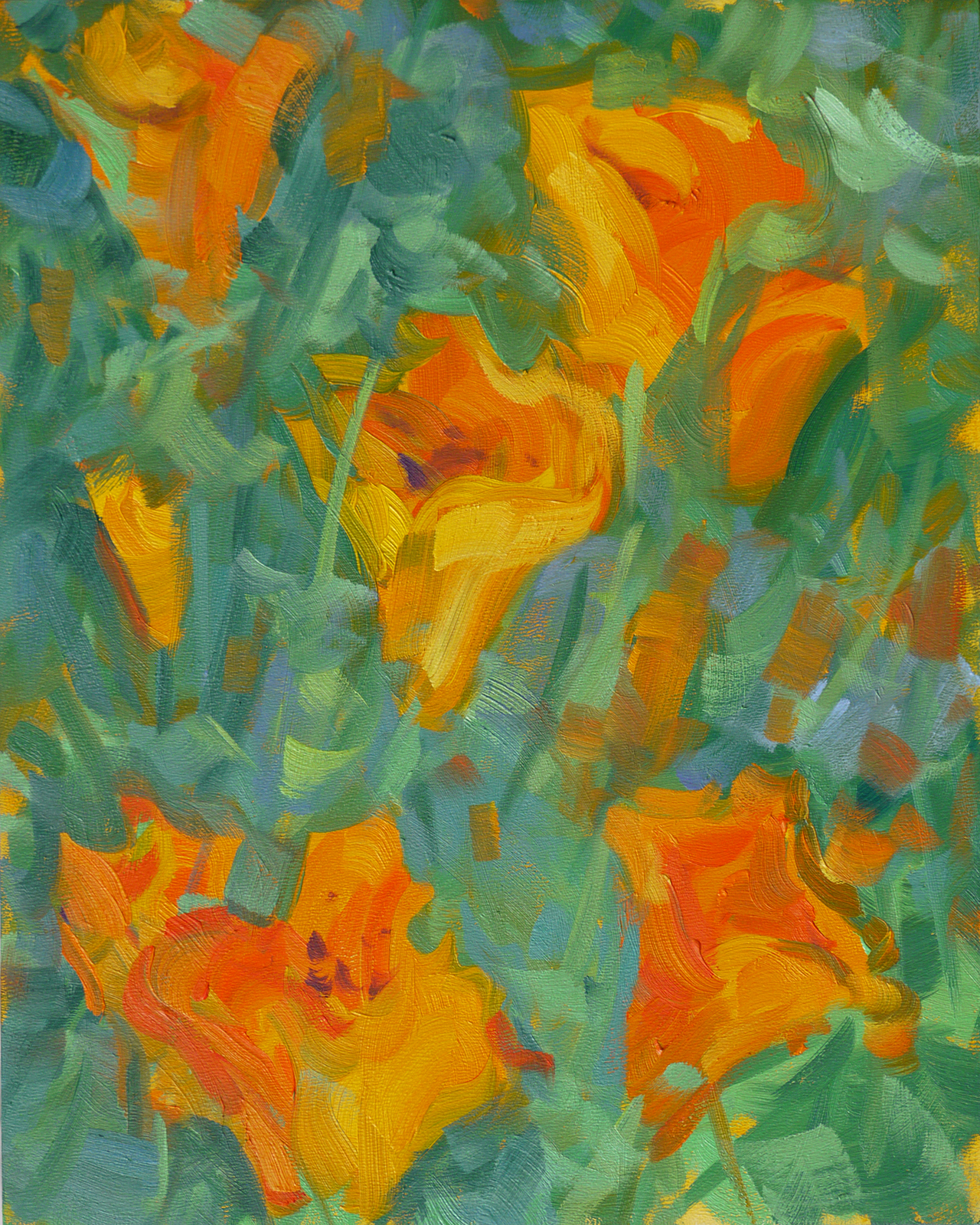 California Poppies (#2)