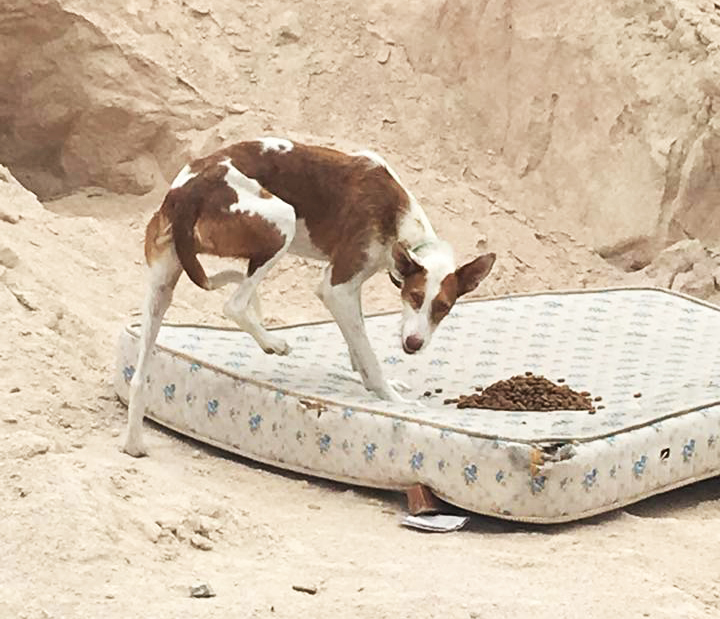 Rescuers were leaving Sansa food, it took several days to catch her.