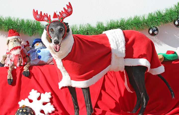 """2018 Christmas Facebook Advent Calendar. """"Tami might be a slighter older girl at 6-7yrs but she's amazing and she knows it. She wiggles her bum when she walks like she's on a runway model 24hrs a day, she never gets tired of looking fabulous and being fabulous."""""""