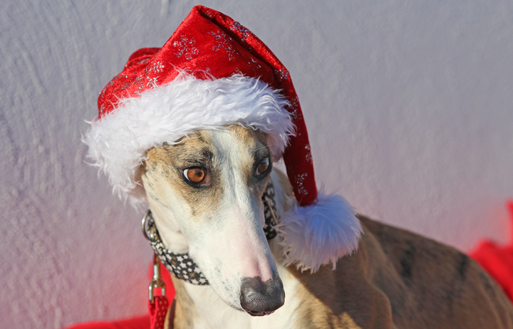 """2018 Christmas Advent Calendar. """"Flamenco is a new arrival to GDS and there is no denying he's extremely handsome."""""""