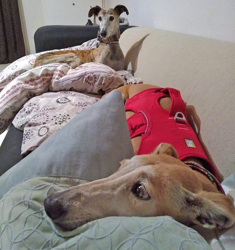 porraidge_couch.jpg