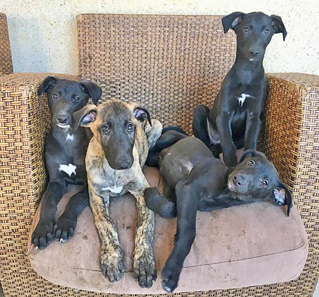 enid-pups_chair.jpg