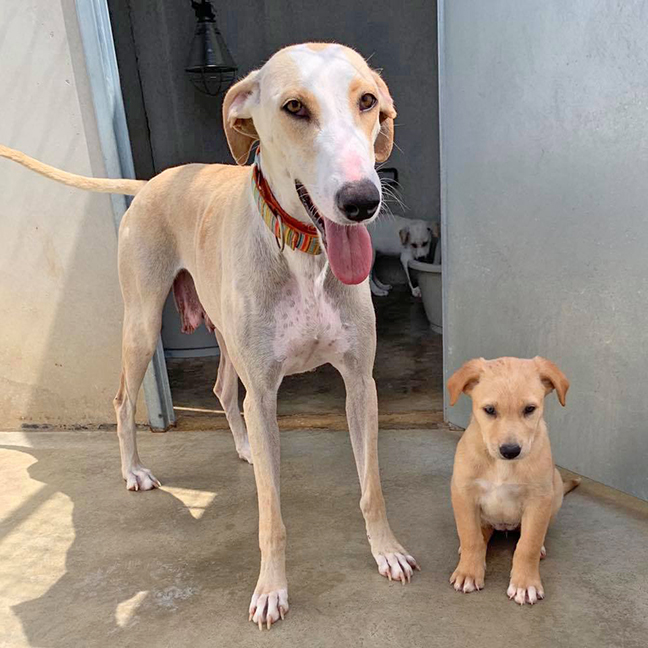 Gloria is the best mum and adores being with her pups!