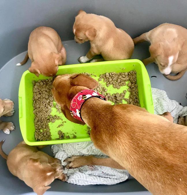 wendy-pup-food.jpg