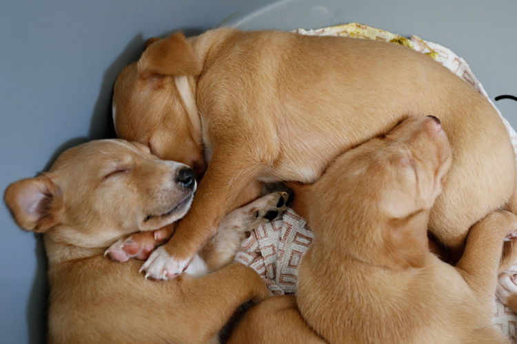 wendy-pups-sleep.jpg
