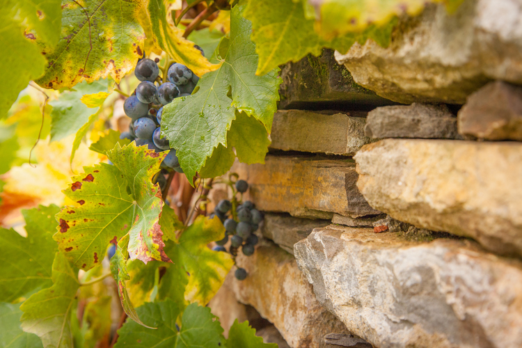 3 acre organic agricultural land (garden, vineyard, fruit trees)