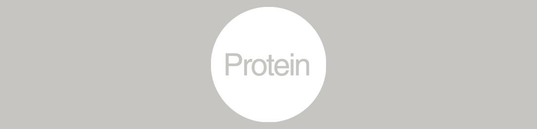 thelightphoneprotein.jpg