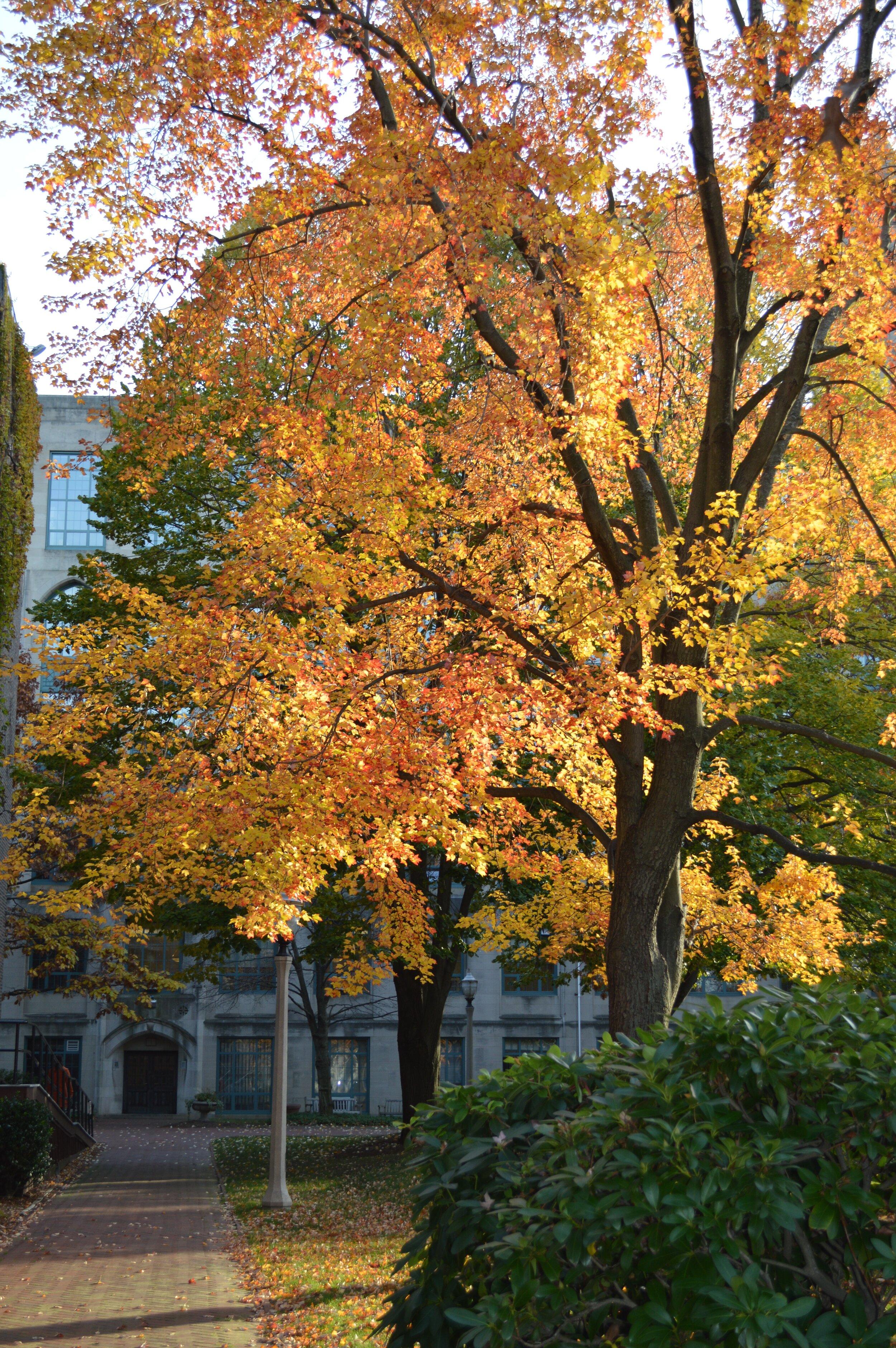 Boston University Campus, 10/2014