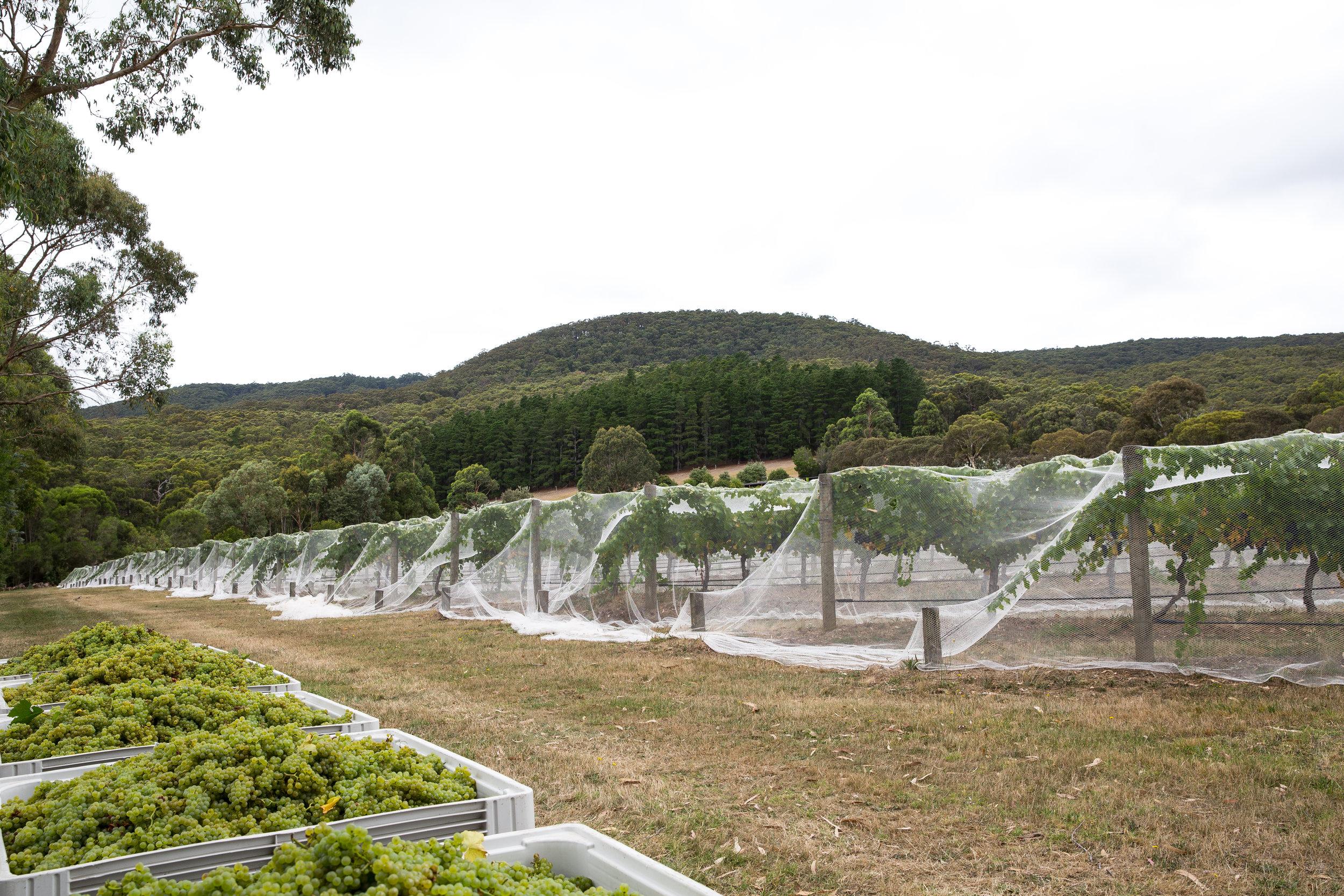 Harriet's Vineyard Chardonnay