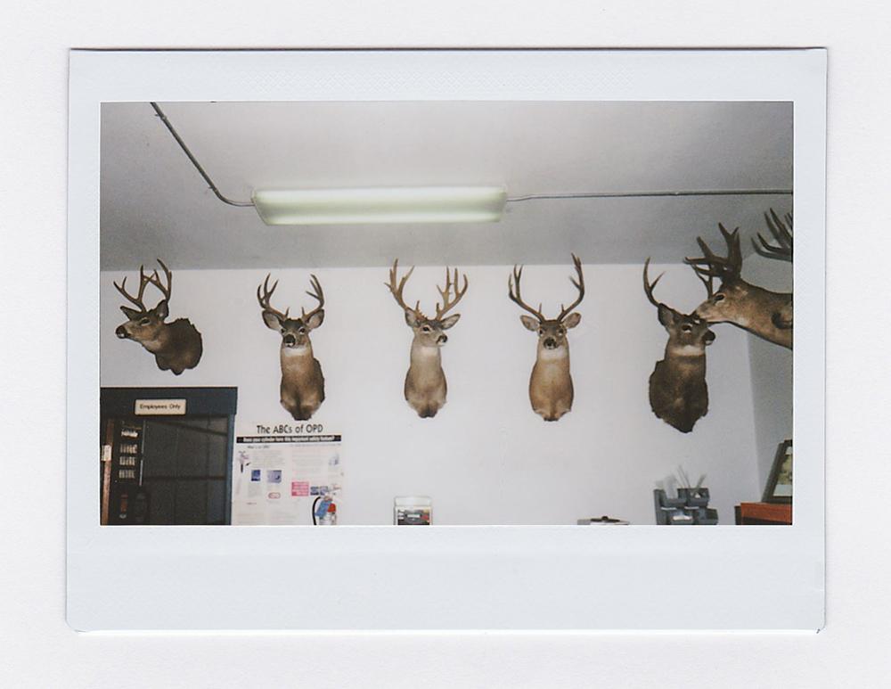 DeersGasStation1.jpg