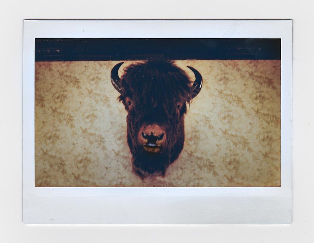 BuffaloHeadInstax.jpg