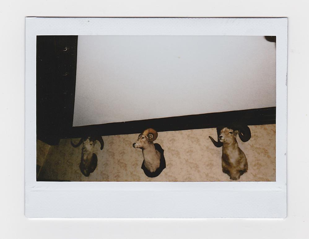 Rams5.jpg