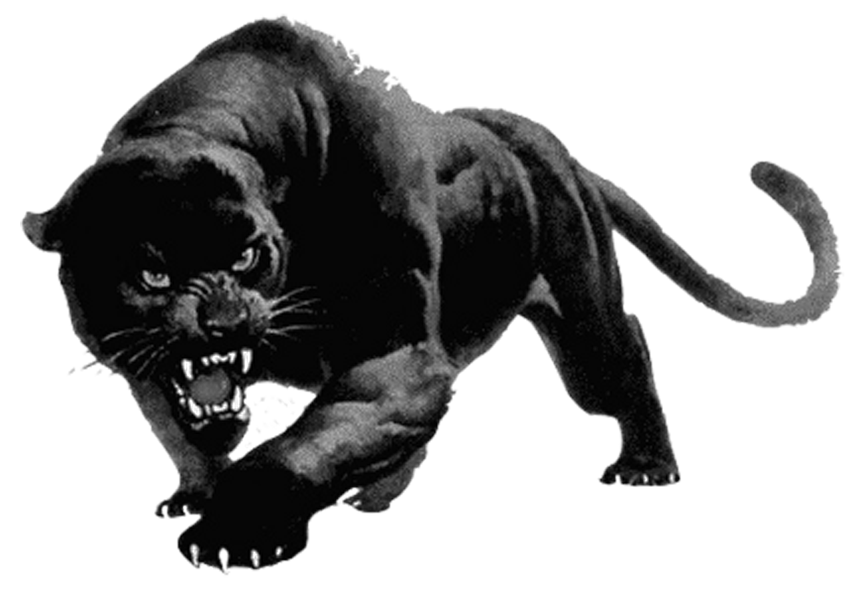 Panther-PNG.png