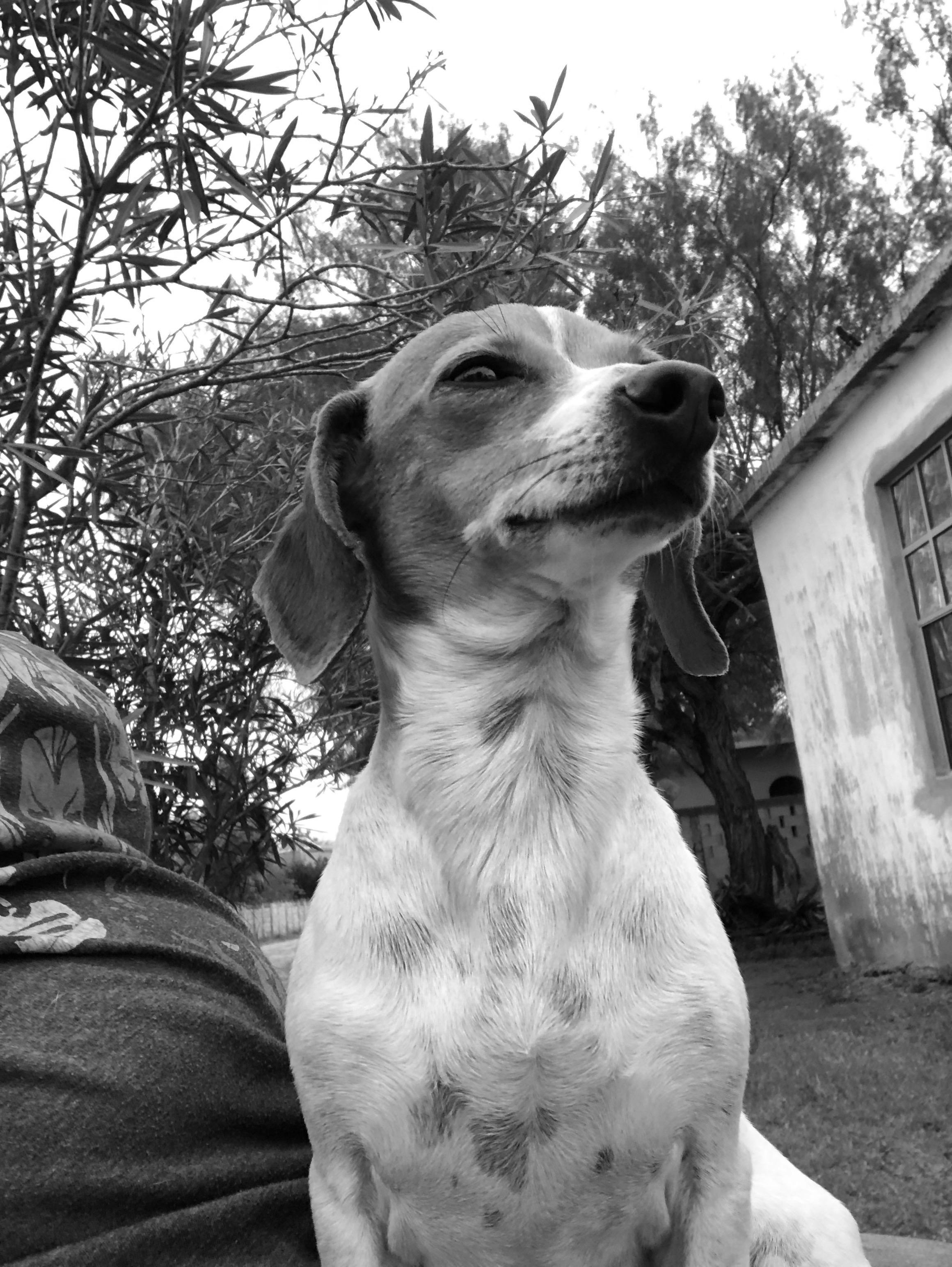 Alicia Olivo 3 dog.jpg