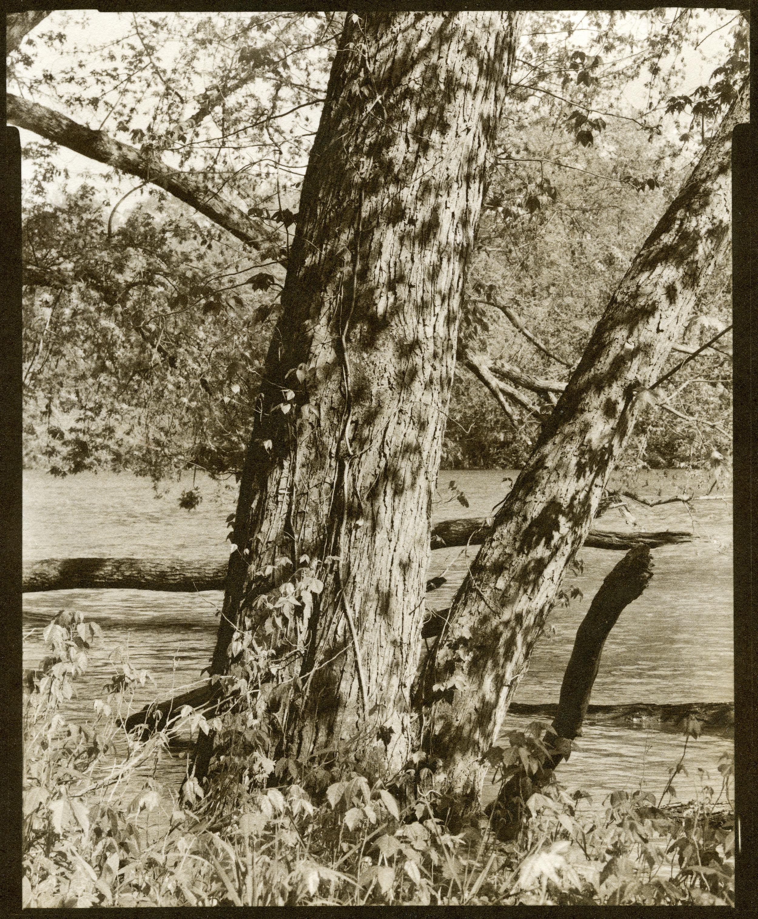 kalitype river017.jpg
