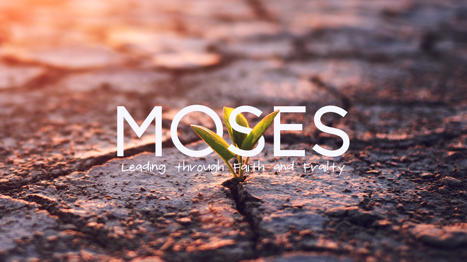 Moses-1920x1080-New.jpg