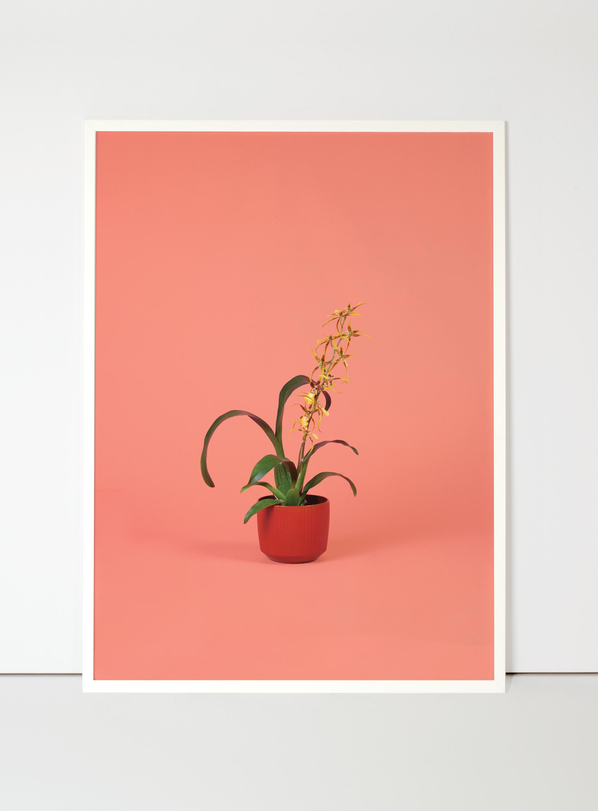 orquídia-flora-indoor-2.jpg