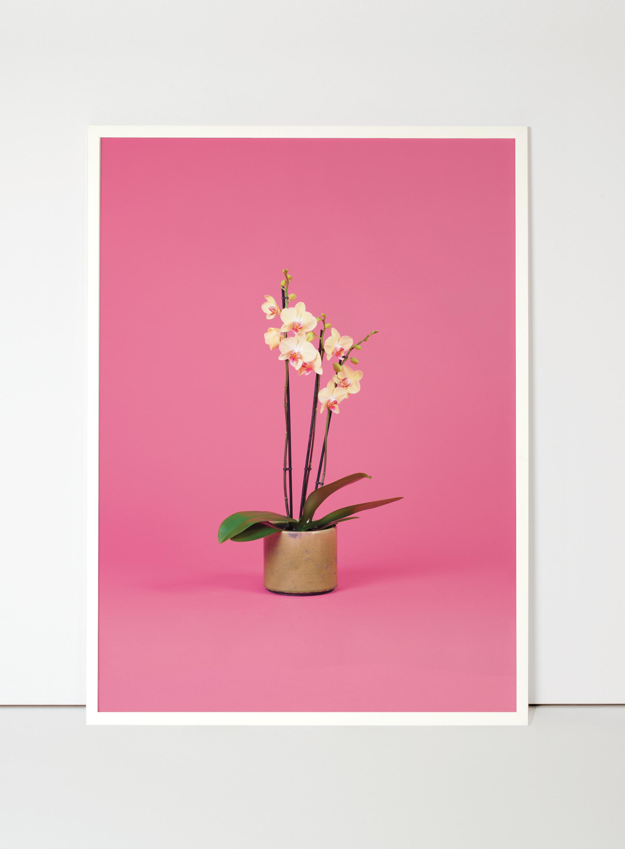 orquídia-flora-indoor.jpg