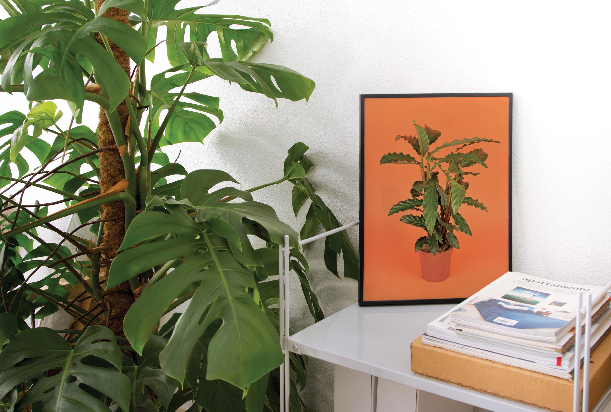 calathea-flora-indoor.jpg