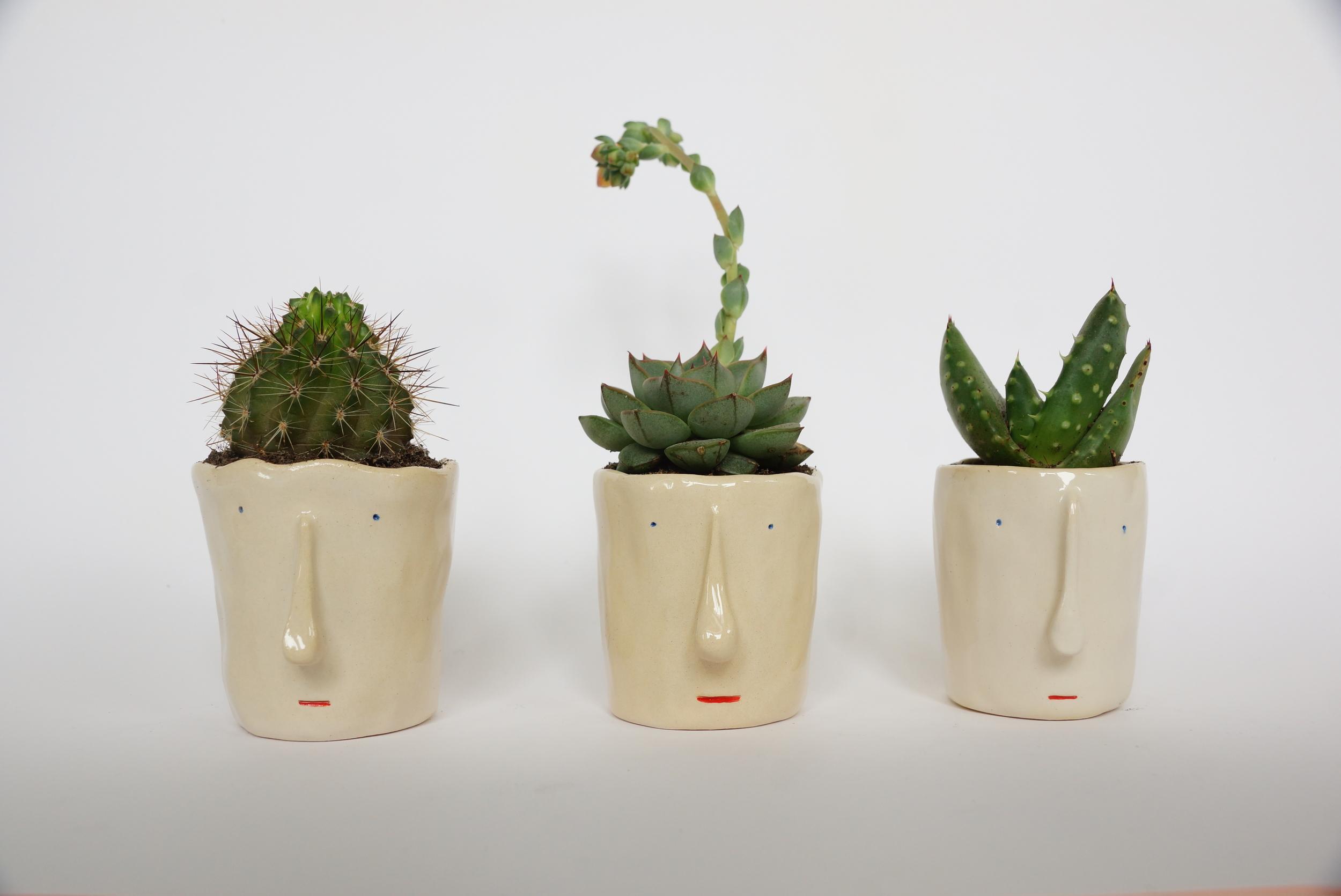 pompilio-plants-testos-plantes-cares.JPG