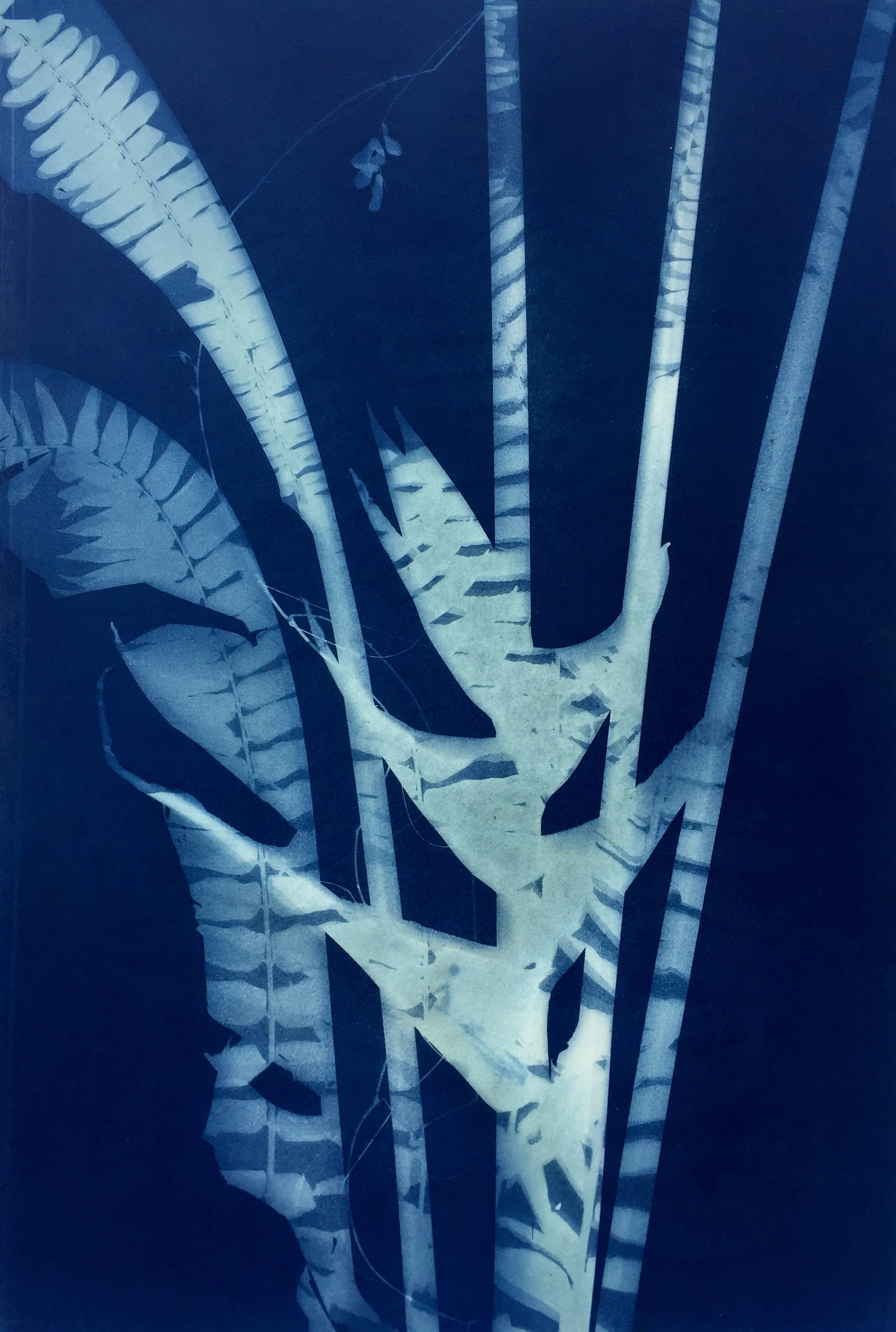 Heliconia  38 x 55cm  SOLD
