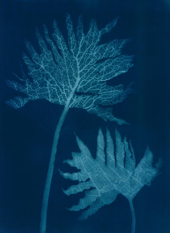 Midnight Philodendrons II  56 x 77cm  £650