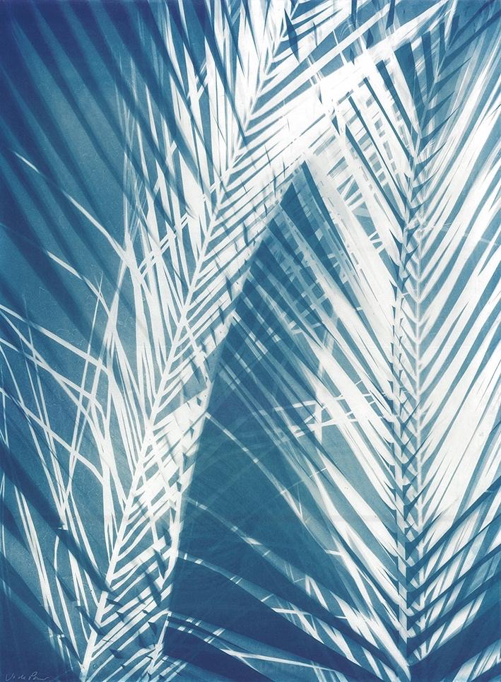 Bleached Palms  56 x 77cm  £490