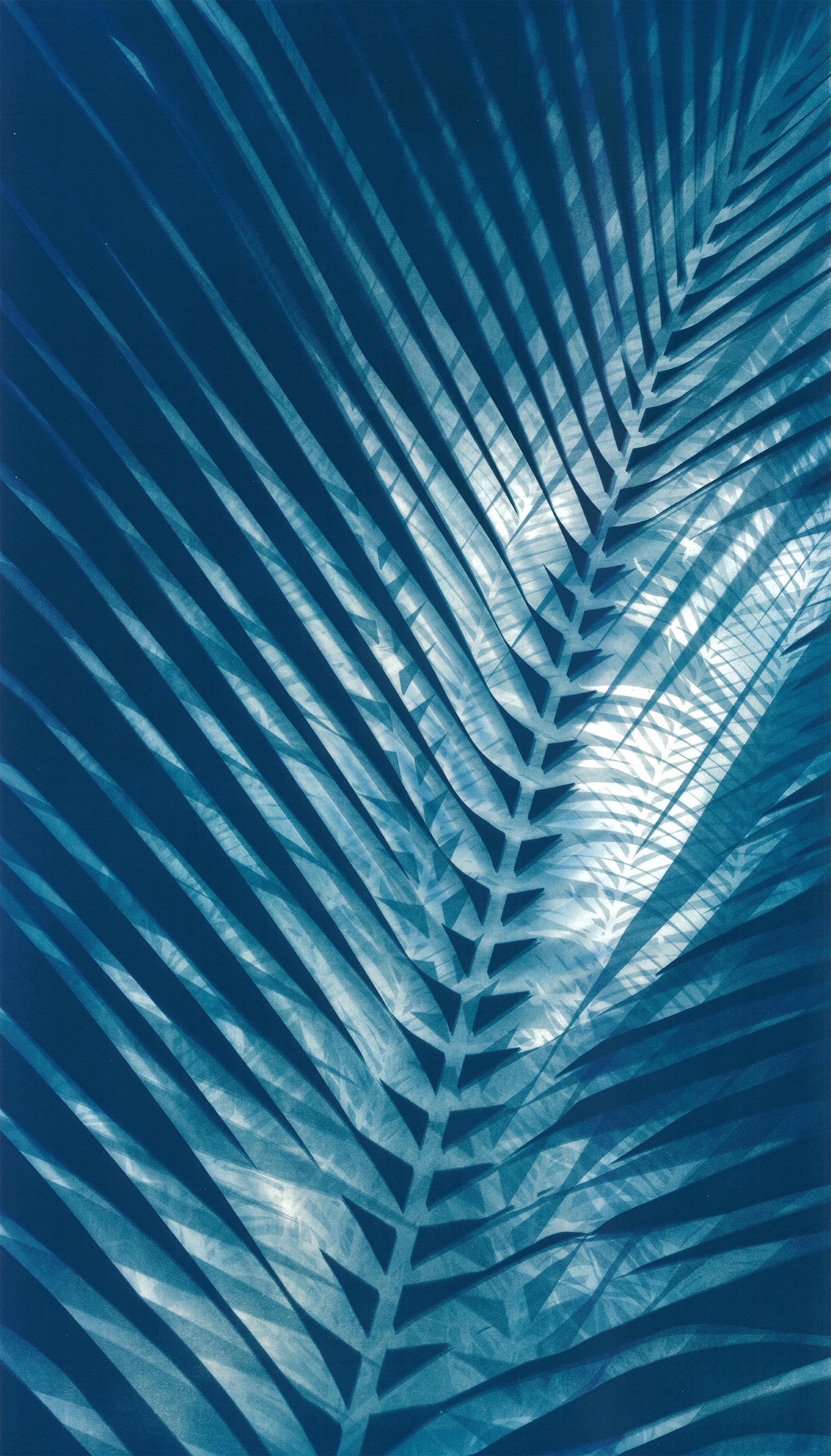 Coconut Palm II  60 x 110cm  £750