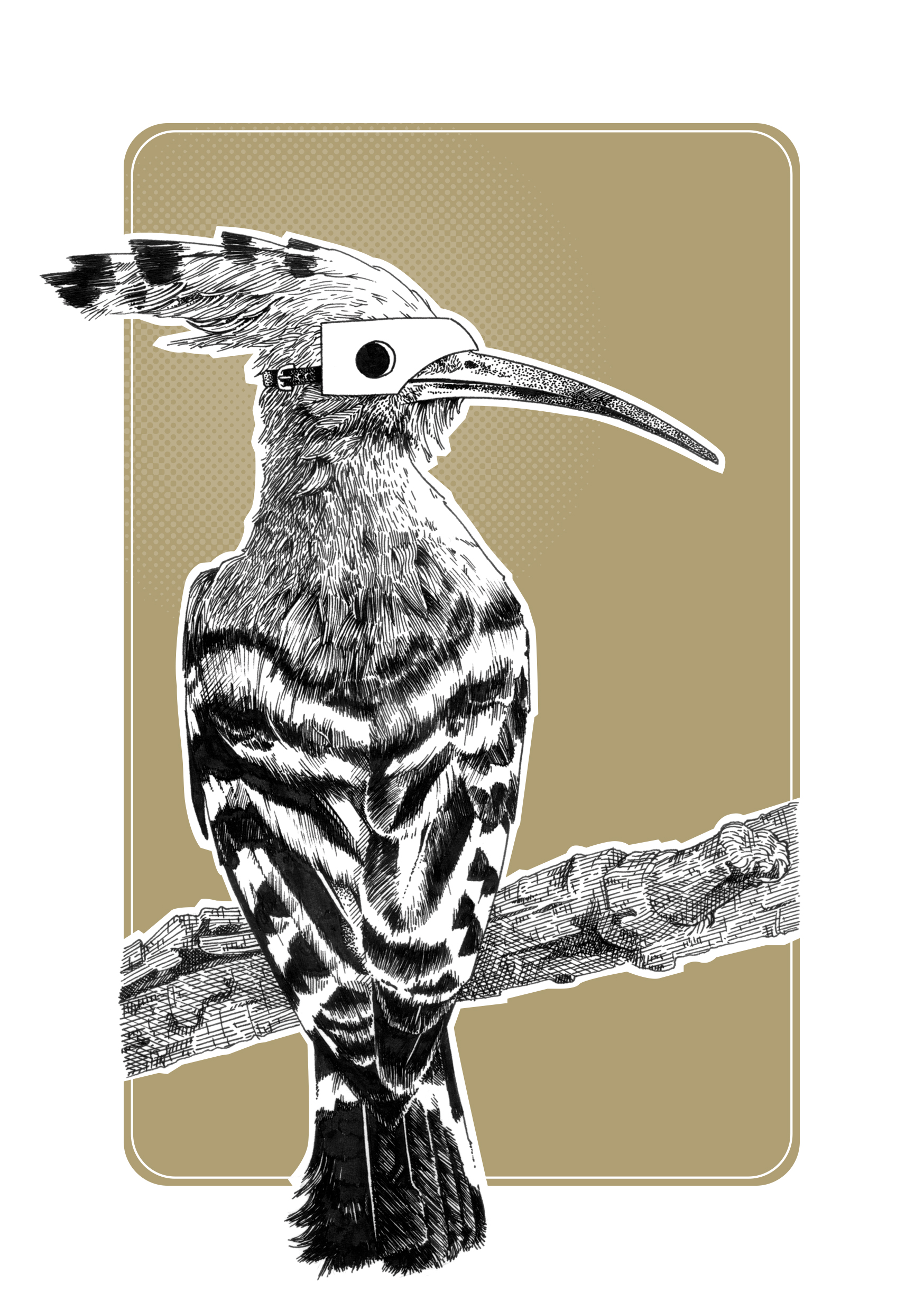 Hoopoe Final XL.jpg