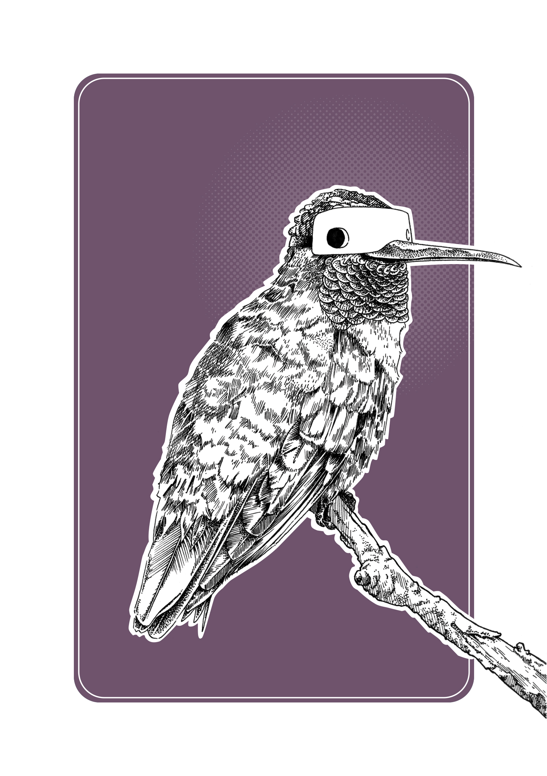 Hummingbird Final XL.jpg