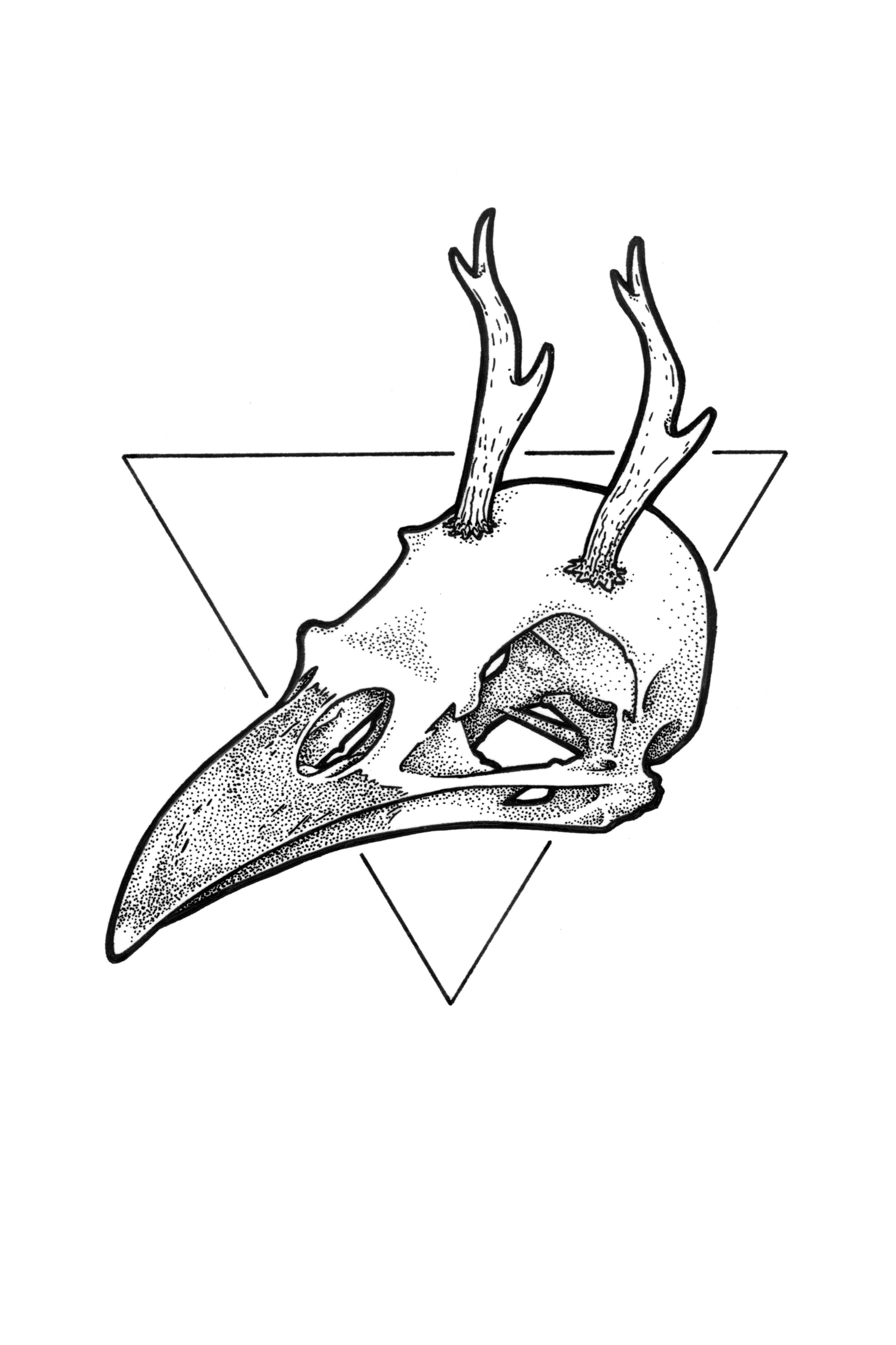antler bird web crop.jpg