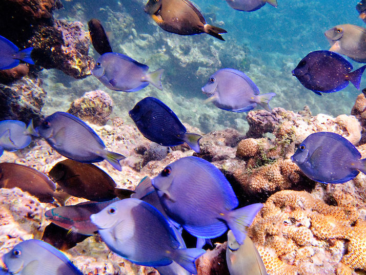 fish-and-coral-on-caribbean-reef-underwater-st-john-f326200000.jpg