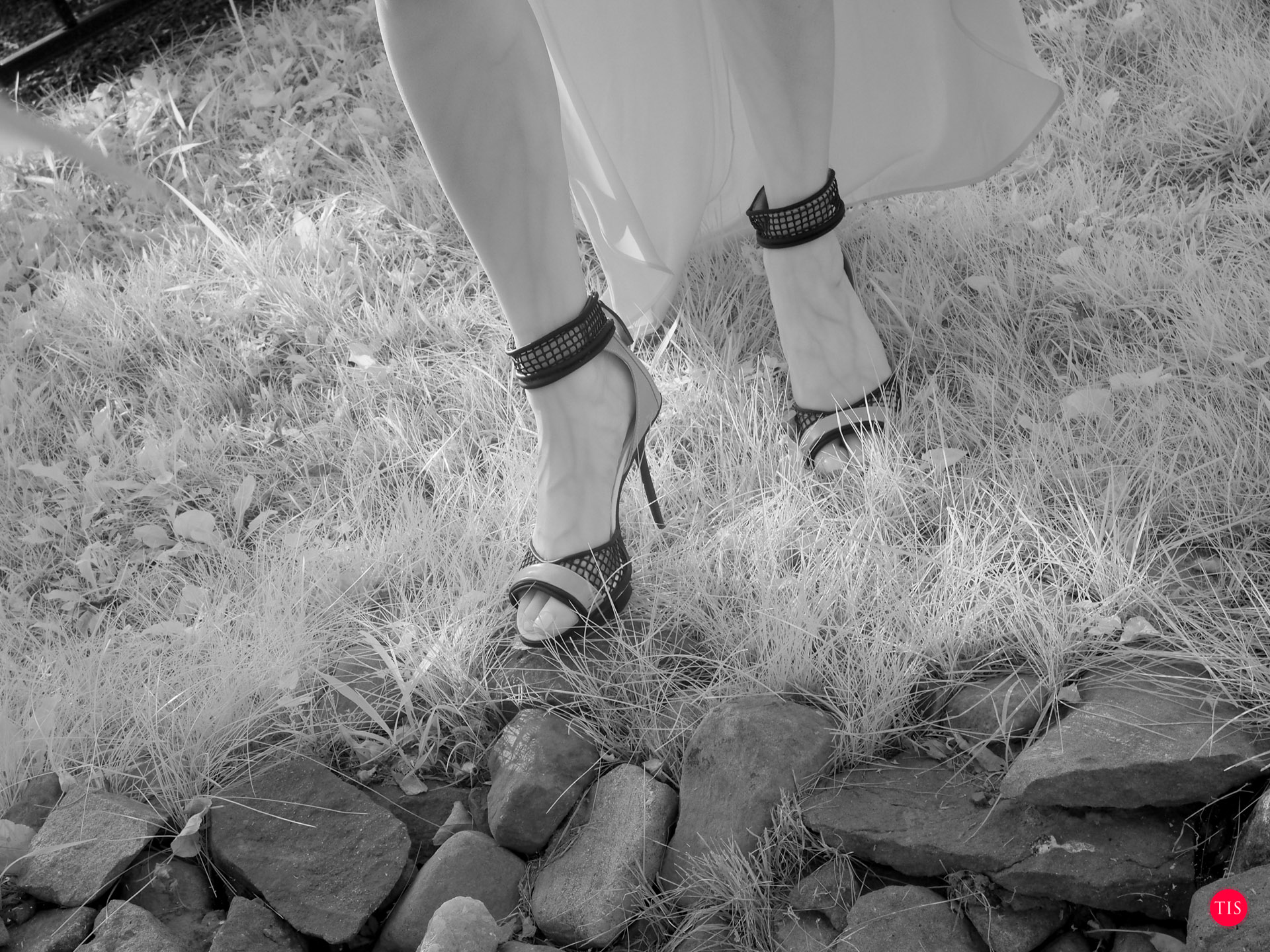 Shoes by Gwen Stefani At Shoe Dazzle