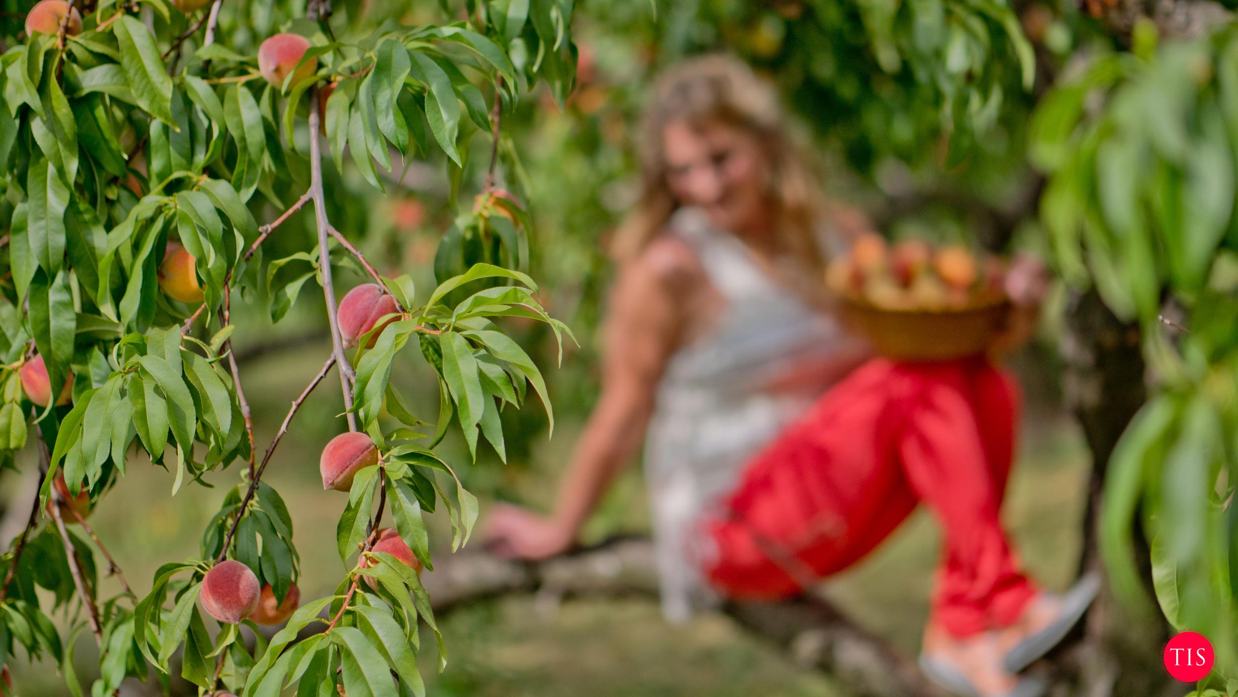 Peach Fashions