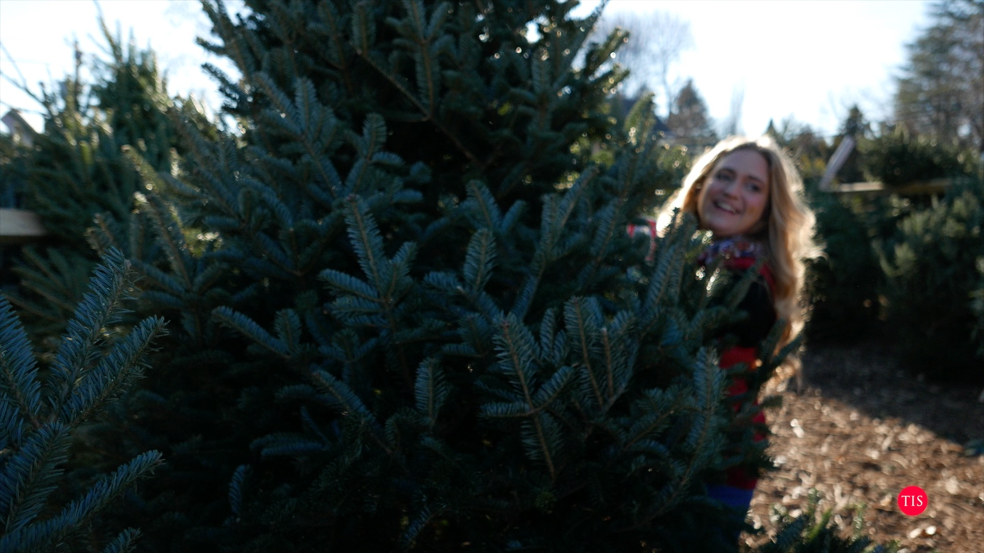 Jennifer at Kogut's in meriden, ct choosing a huge tree for the house