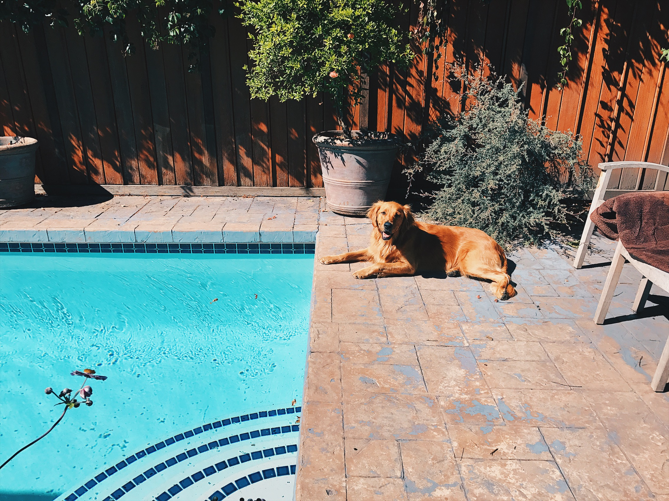 dogs and pools, it doesn't get better (we added a little wine and ice cream too).