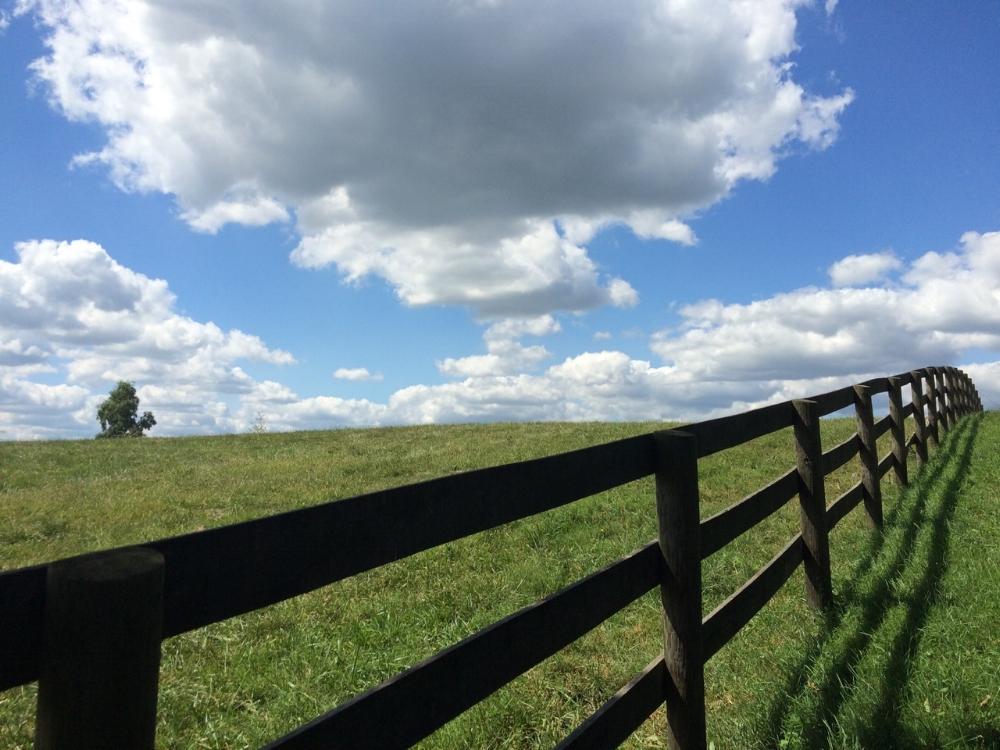 The fields of Chapel Hill Farm