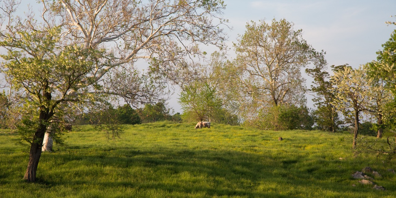 Randall Linebacks on Chapel Hill Farm