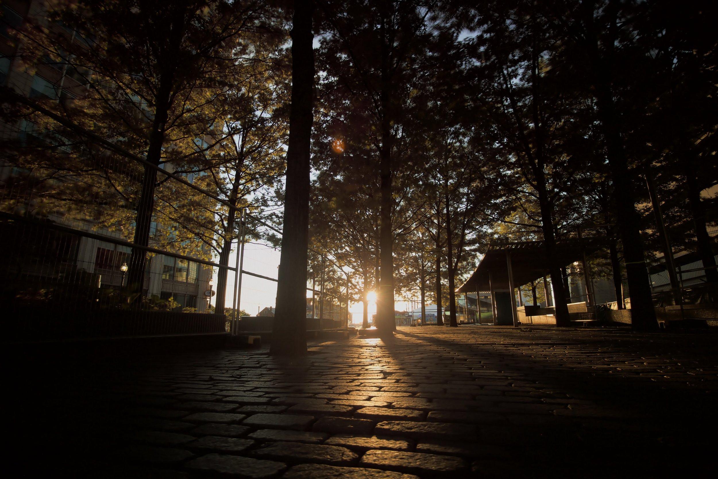 sunintrees.jpg