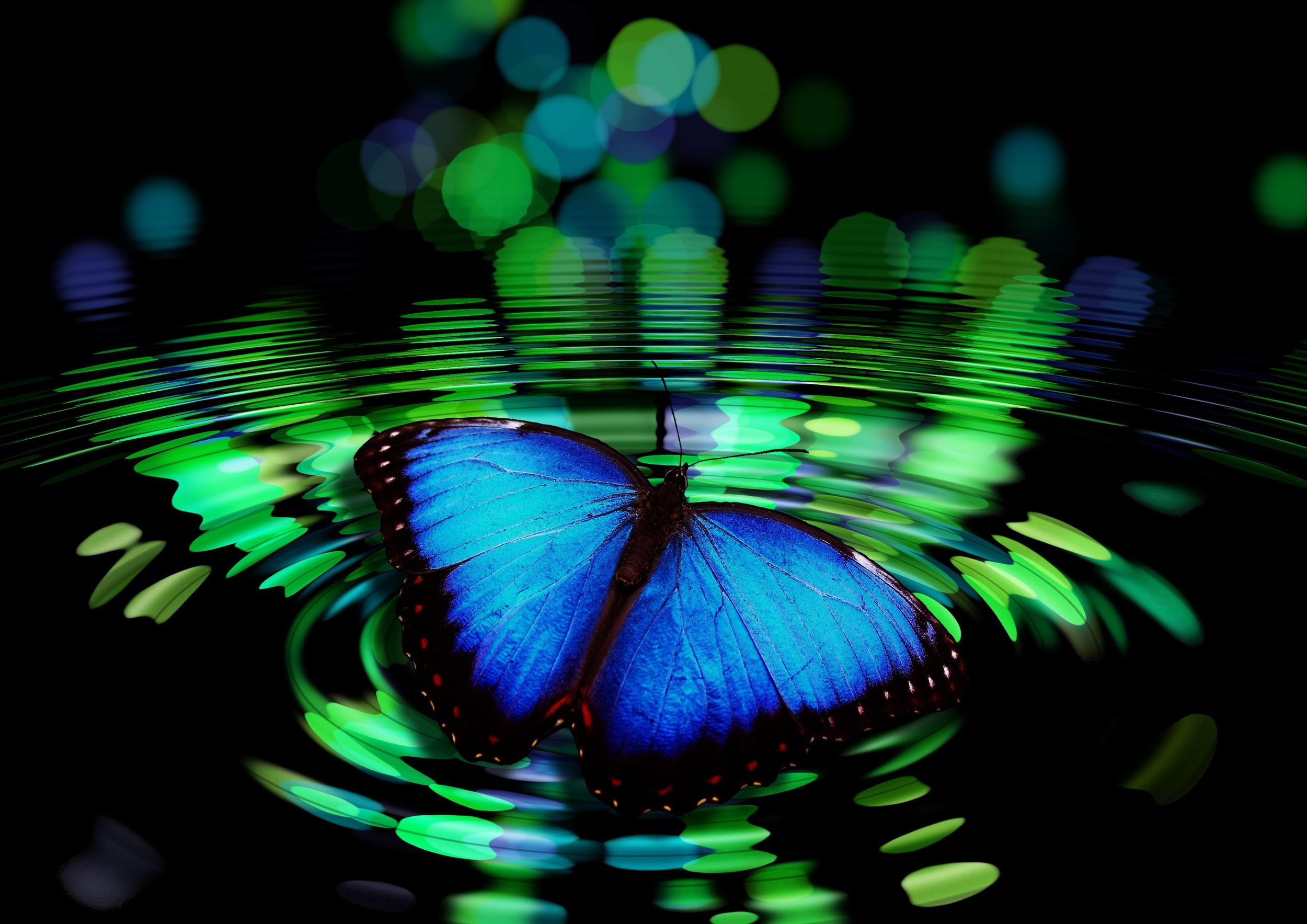 butterfly-492536.jpg