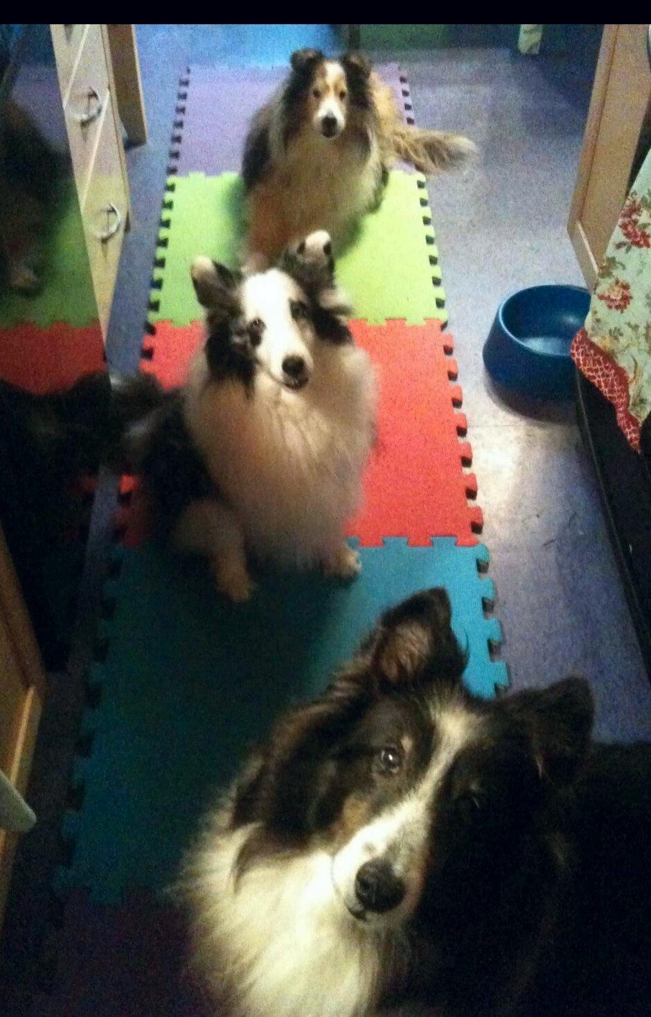 Tex, Savannah, and Goat