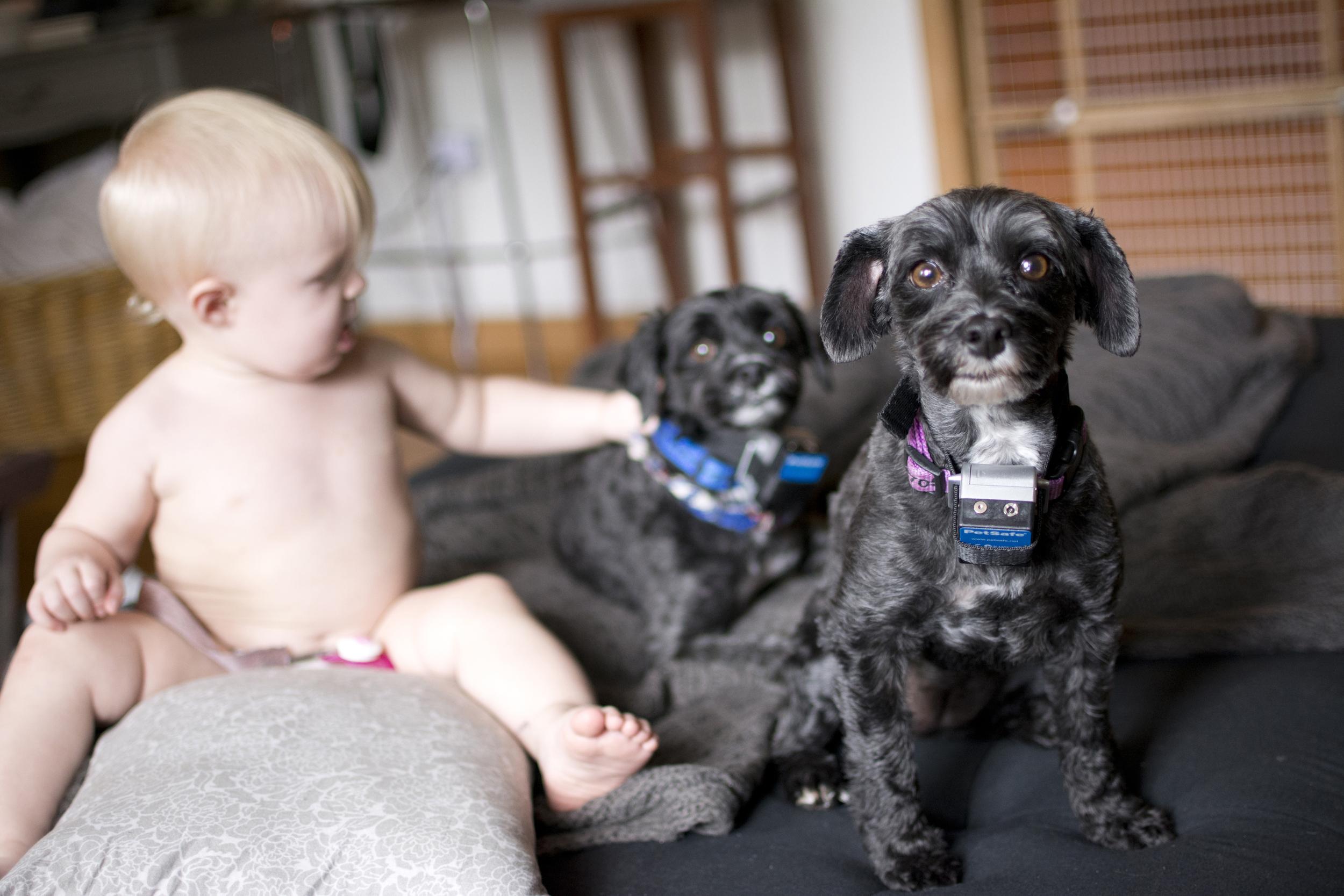 puppies_bailey_s.jpg