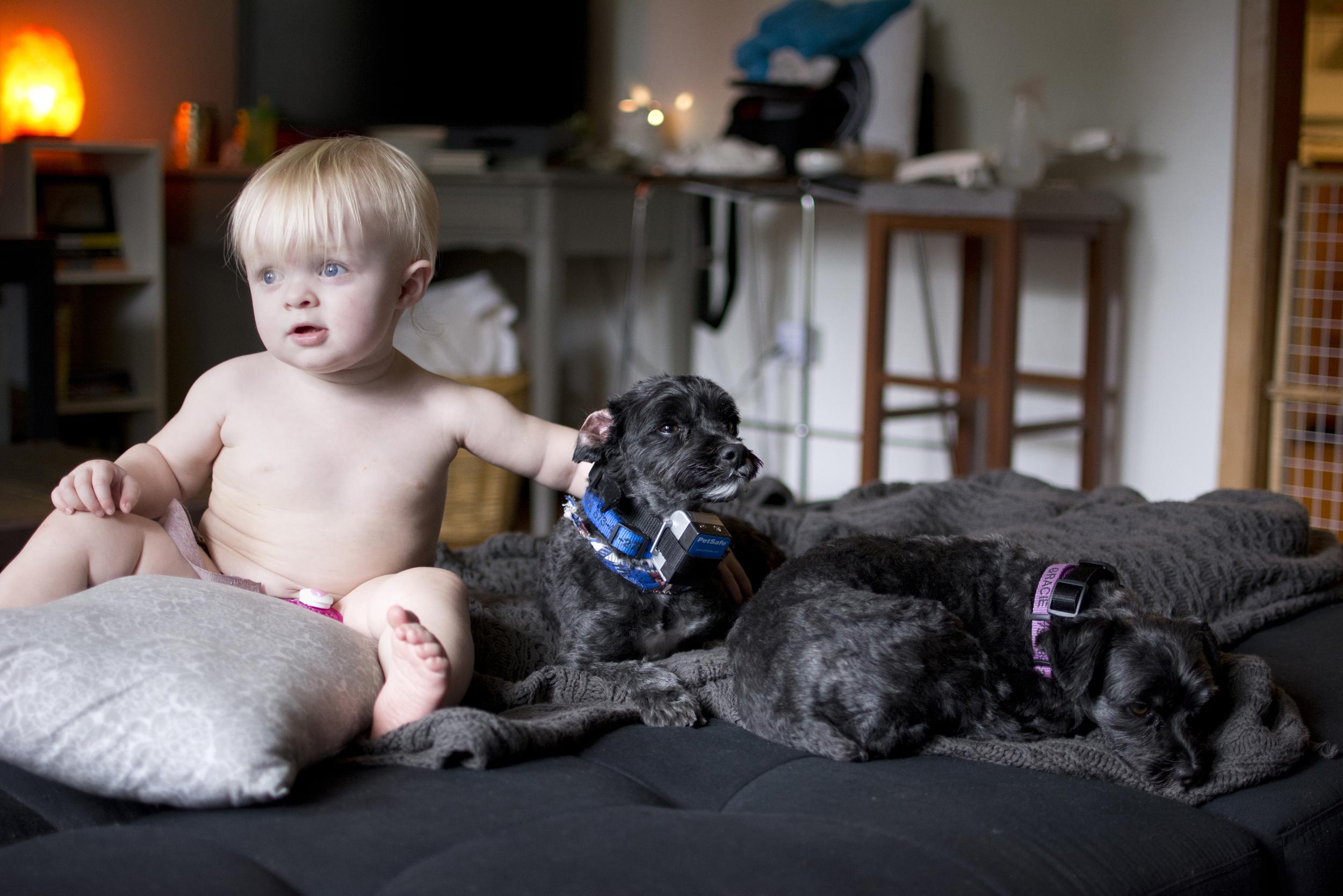 puppies2_bailey_s.jpg