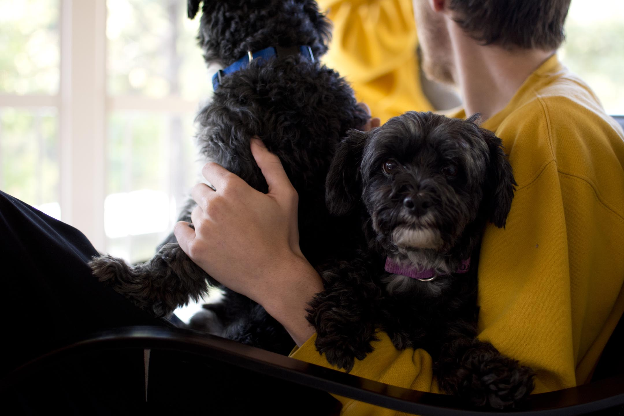 brett+puppies3_lakehouse_10-10-15.jpg