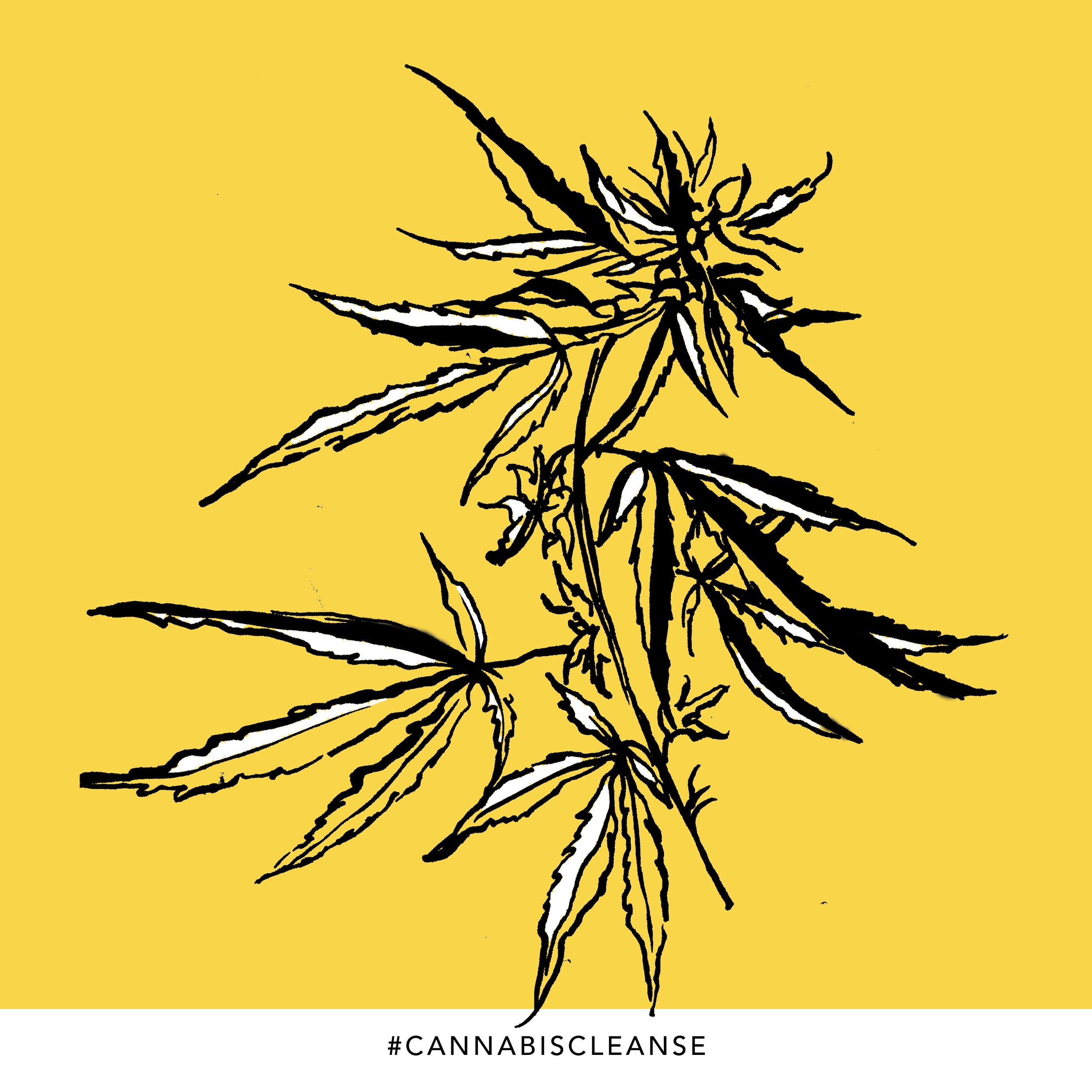 instagram-cannabiscleanse19.jpg