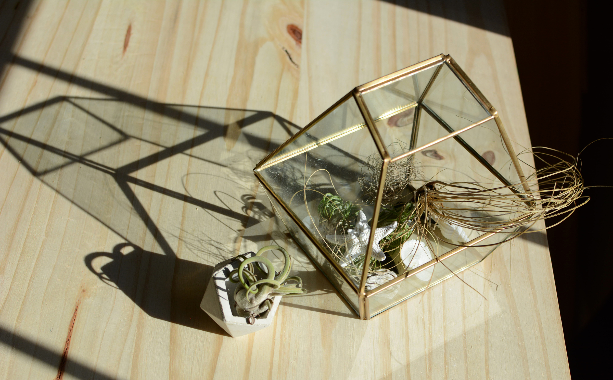 Geometric dish by Concrete Geometric  /  Glass geometric terrarium from Hobby Lobby  /  Air plants from Amazon  / Starfish and shells found in the sea