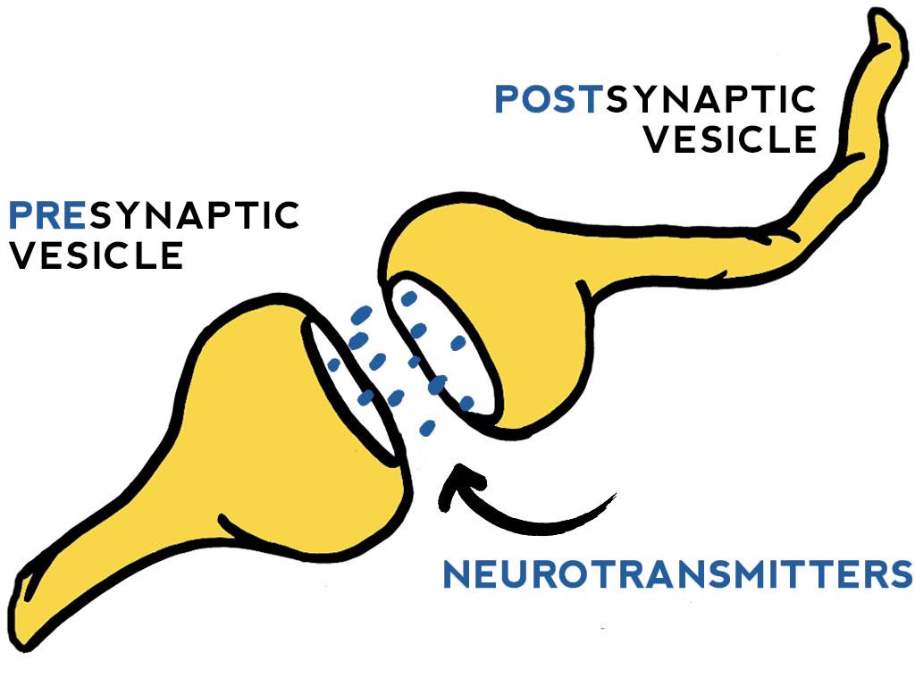 endocannabinoid-system-illustration-kristen-williams