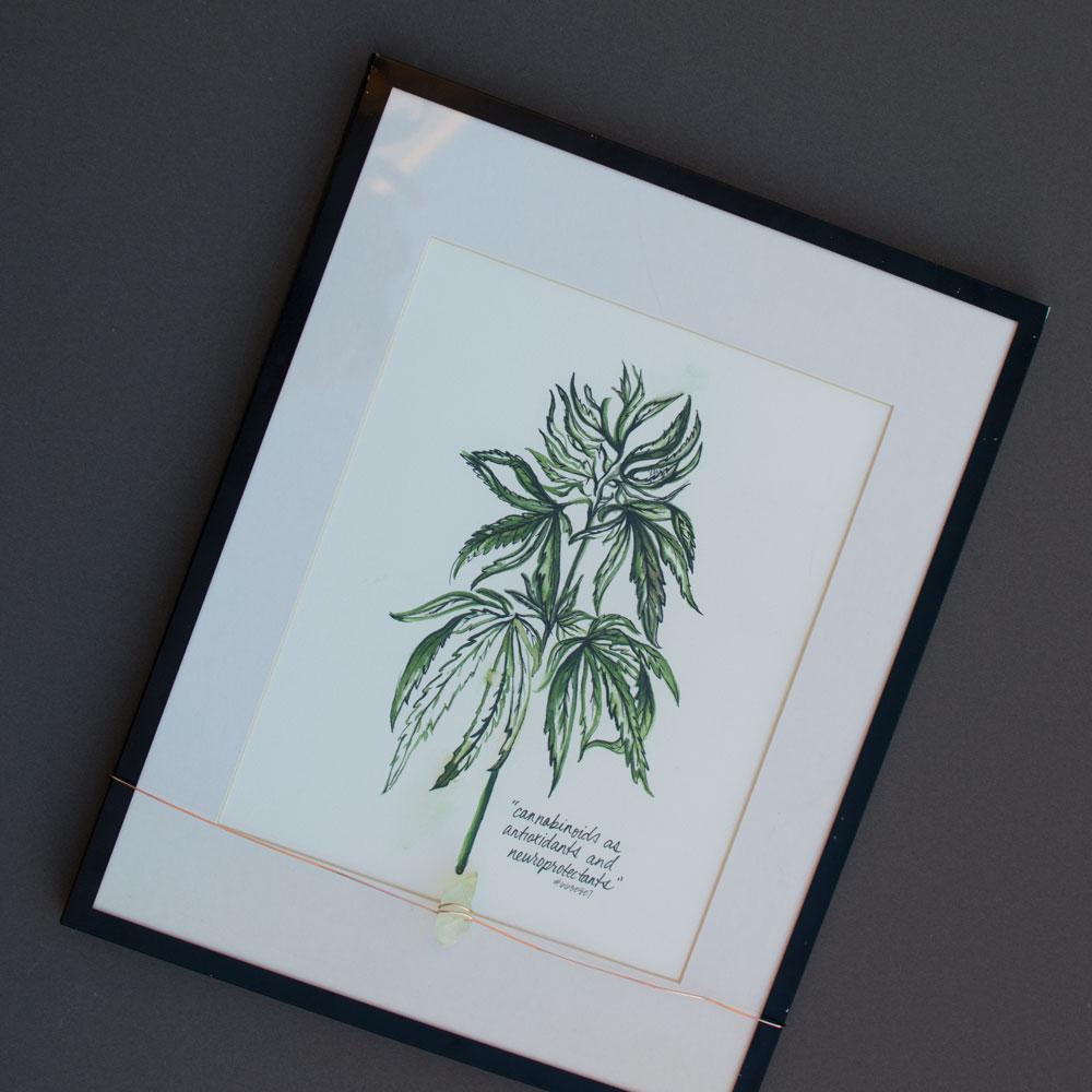 hemp-watercolor-illustration-kristen-williams-designs