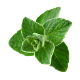 thyme.png